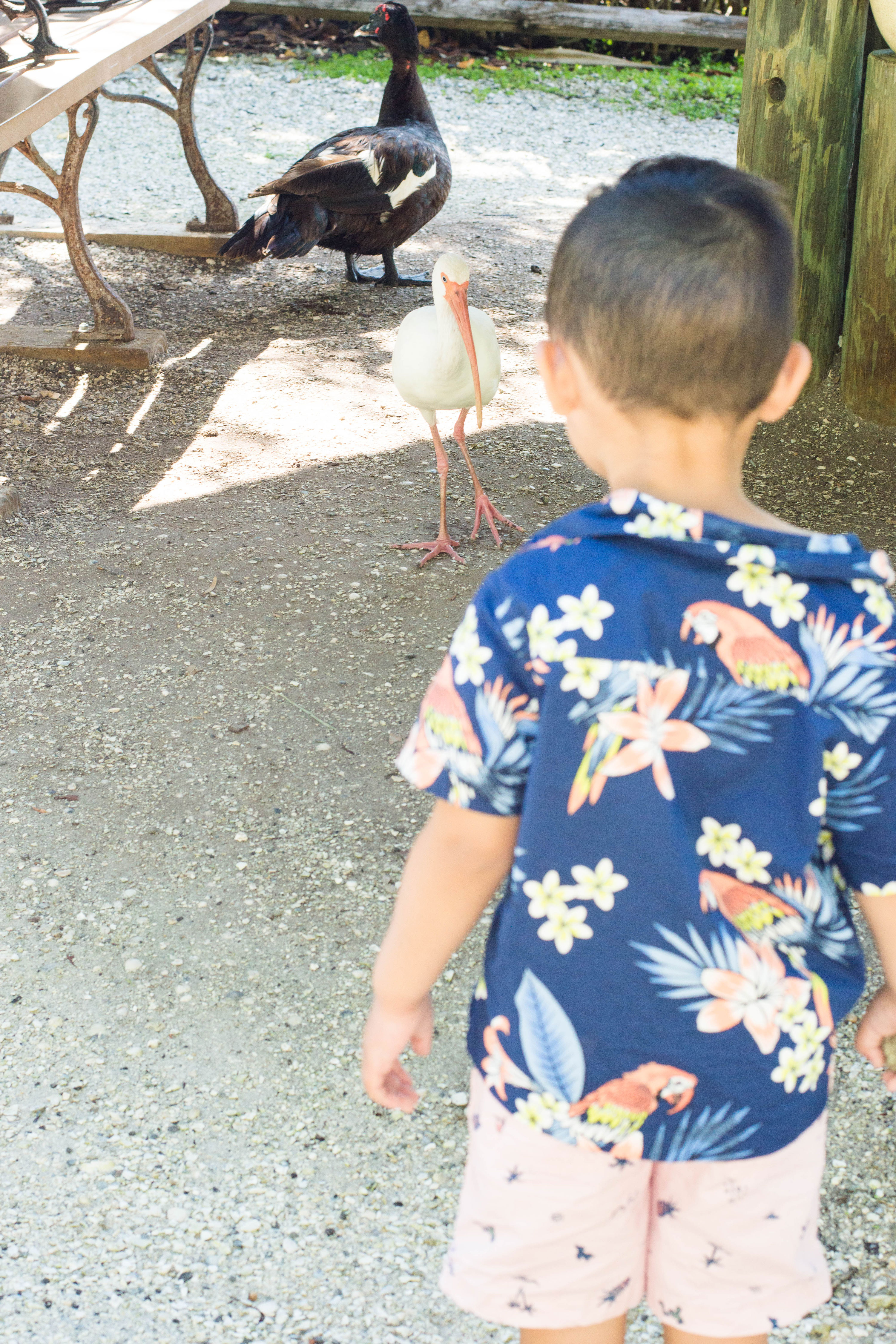 Here we are, at one of Florida's very popular zoos: Naples Zoo. Check out why it's the ultimate destination for you and your fam! #naplesflorida